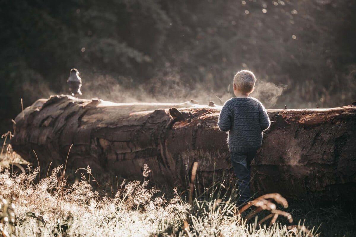 træstamme-krage-fugl-dreng-stemning-